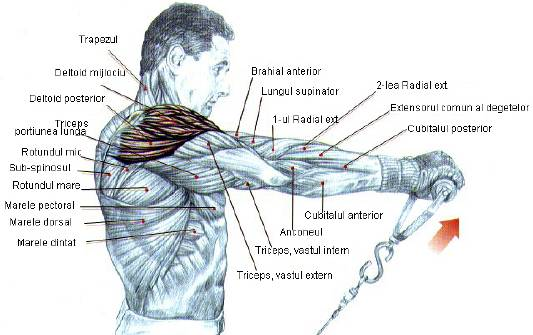 exercitii pentru abdomen fete