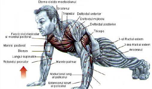 exercitii pentru gambe acasa